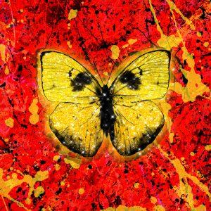 Ed Sheeran - 'Shivers' Butterfly
